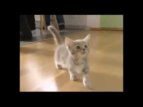 Meow, Miau, Cute Kitty and Cat Compilation