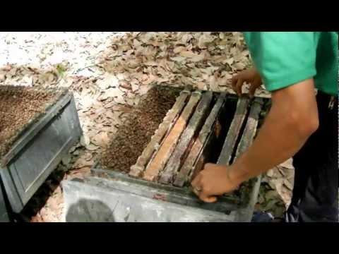 Nomadic Bee Farmers of Vietnam