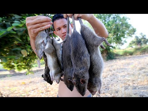 PRIMITIVE TECHNOLOGY : FIND GIANT RAT  BY HAND IN FOREST _ ROASTED MOUSE RECIPE EATING DELICIOUS