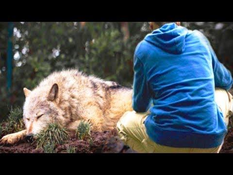 Ein Mann rettete eine Wölfin aus einer Falle, einige Jahre später rettete sie ihm das Leben