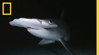 Sharks at Night: Incredible Underwater Footage