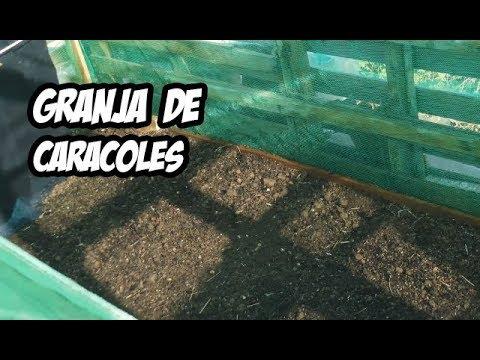 Como hacer una granja de caracoles paso a paso youtube for Como hacer un criadero de cachamas