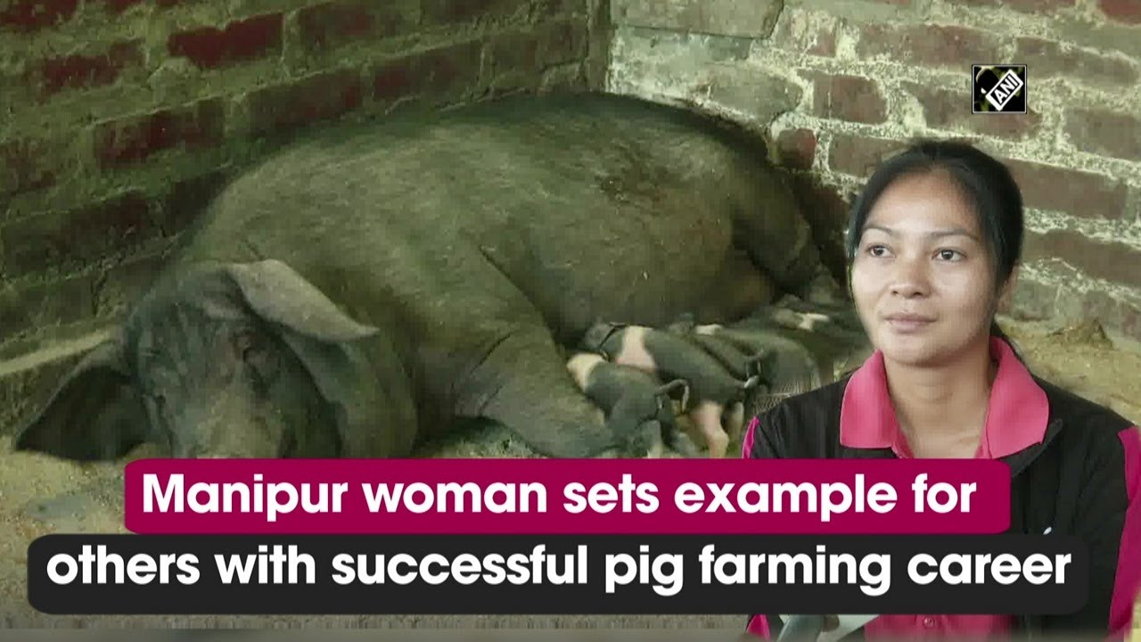 Manipur woman sets example for others with successful pig farming career