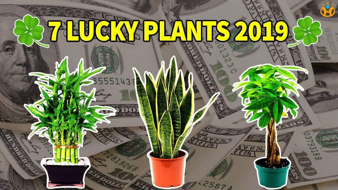 Plants That Bring Luck