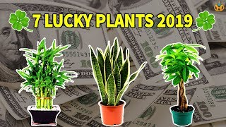 7 Lucky Plants Bring Health, Wealth & Prosperity in 2019 - Know Everything