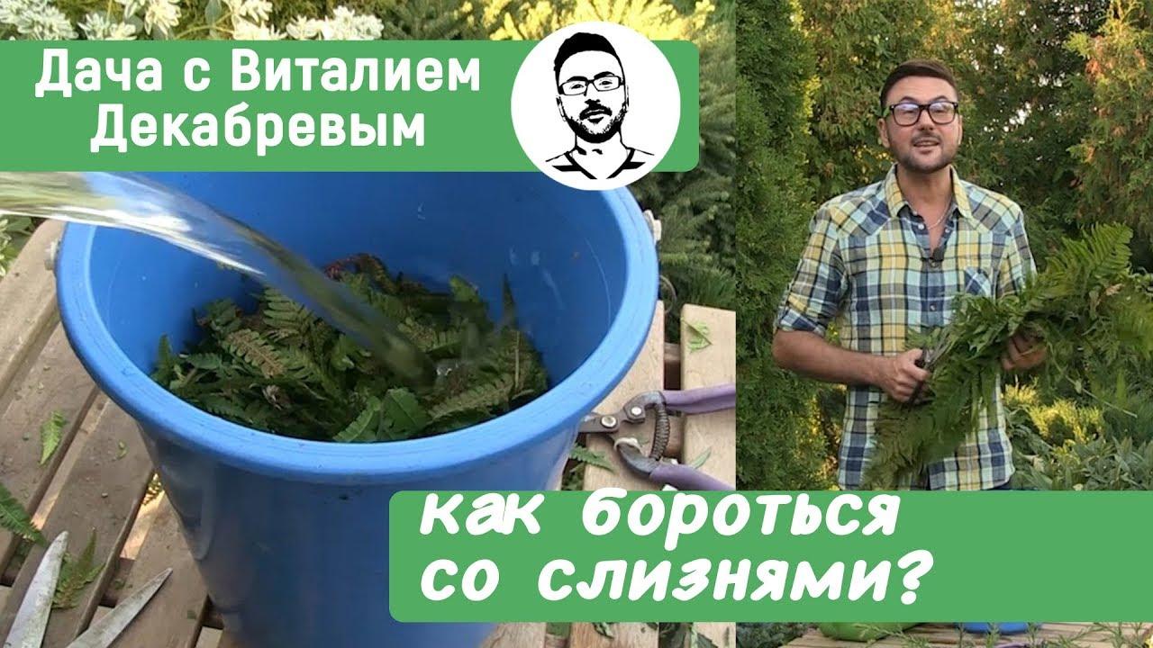 Простой метод борьбы со слизнями в огороде