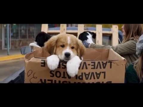 'A Dog's Purpose' (2017) Official Trailer   Dennis Quaid, Britt Robertson