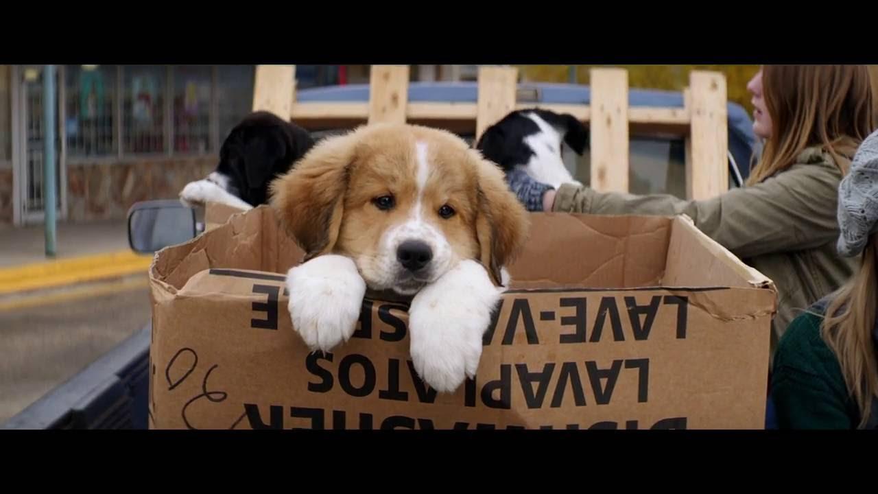 Výsledok vyhľadávania obrázkov pre dopyt a dog's purpose