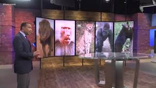 Popular exotic pets in Texas