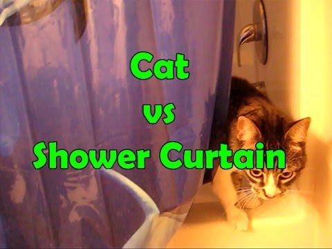 Cat Shower Freak Out