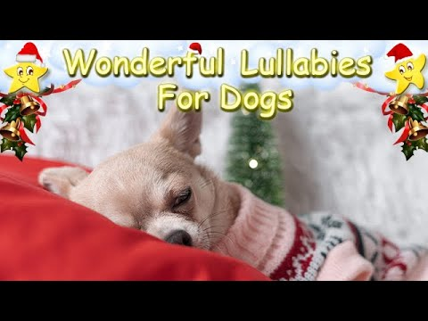Super Relaxing Christmas Sleep Music For Chihuahuas ♫ Calm Your Pet ♥ Lullaby For Dogs Animal Music