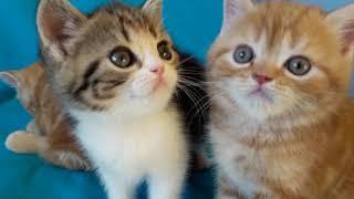 Милые ,прелестные котята ,нежные рыжули!
