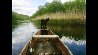 Приучаем к лодке  русско-европейскую лайку видео