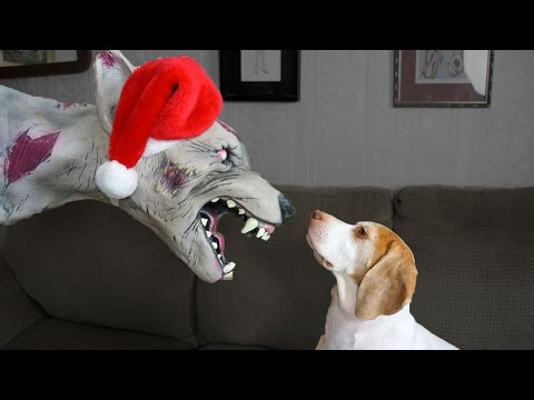Christmas Zombie Dog vs. Cute Dog Maymo