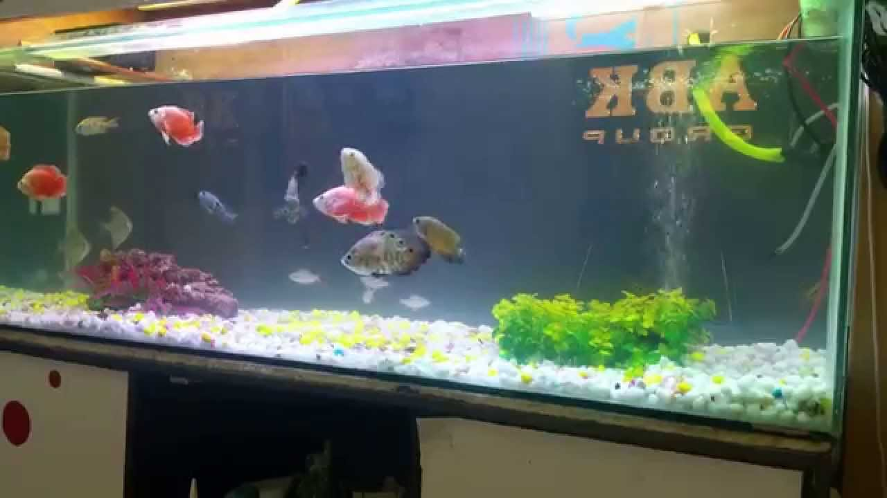 Oscar fish tank setup youtube for Youtube fish tank