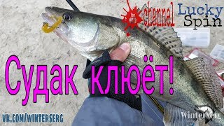 Клёвое место  Рыбалка в Ростовской области  Ерик Лагутник  Спиннинг   ловля щуки и окуня