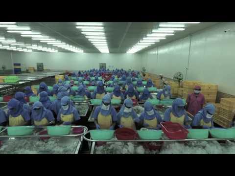 Falcon Marine Exports Ltd