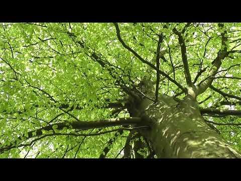 Звуки природы для медитации, пение птиц