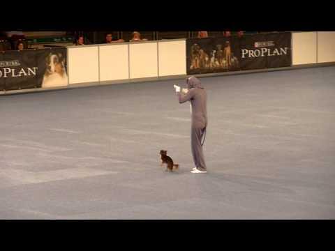 Vanda & Enrisa Orlen, Czech Republic - World Championship in Dogdancing, Austria 2012