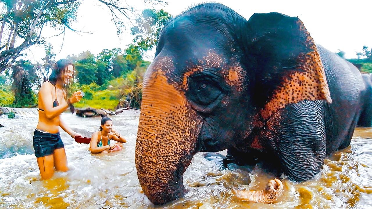 Bagno con gli elefanti youtube - Bagno con gli squali sudafrica ...
