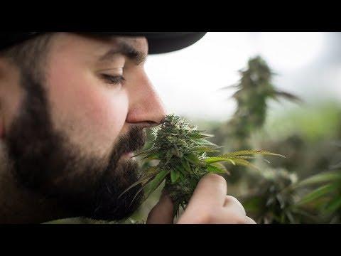 Легализация марихуаны в израиле как тереть коноплю правильно