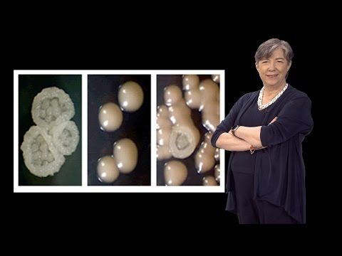 Susan Lindquist (Whitehead, MIT / HHMI) 3: Prions: Protein Elements of Genetic Diversity
