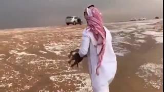 #مشهد_مؤثر :  موقف إنساني  لشاب سعودي ينقذ كلبين جرفتهما السيول #امطار_الرياض