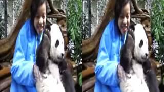 Funny home videos children Funny Animal Videos 2015