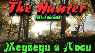 The Hunter Call of the Wild - Медведи и Лоси