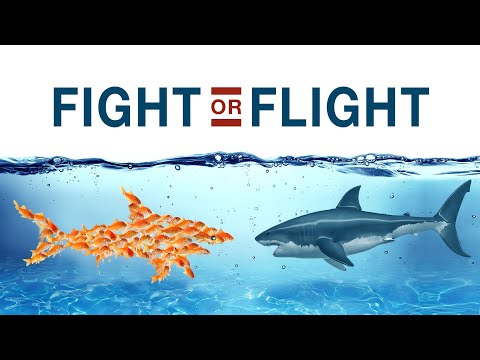 #ENLive! | Fight or Flight 🦈  with Ps Joey Bonifacio and Ps Mark Chew