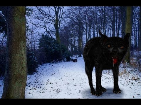 Cryptids and Monsters:  The Black Shuck