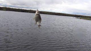 БЕШЕНЫЙ КЛЕВ КАРАСЯ  Осенняя карасевая рыбалка на донку и поплавок