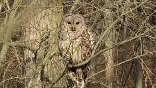 Barred owl's Perch & Pond