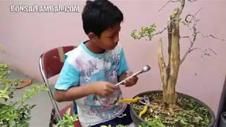 Kreatif ! Bocah bocah ini bikin bonsai dan pot bernilai tinggi