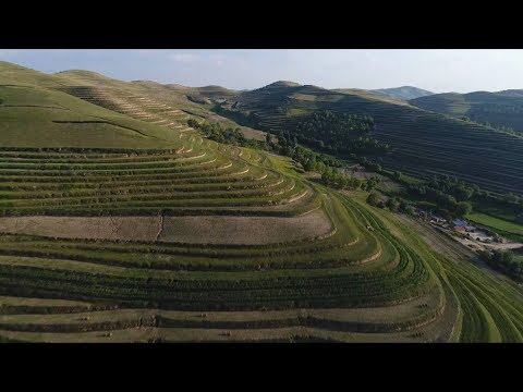 From barren hills to green terraces: Watch Loess Plateau in northwest China