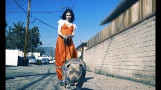 Electromagnetic Pulse by Grimes