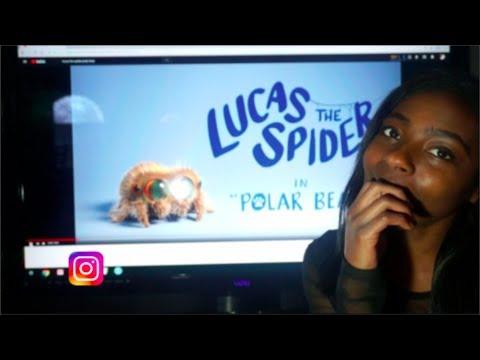 LUCAS THE SPIDER POLAR BEAR ADORABLE REACTION + Giveaway