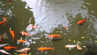 Shunde Qinghui Park Foshan China Koi Fish Dragon Fountain