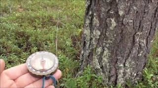 как определить части света в лесу