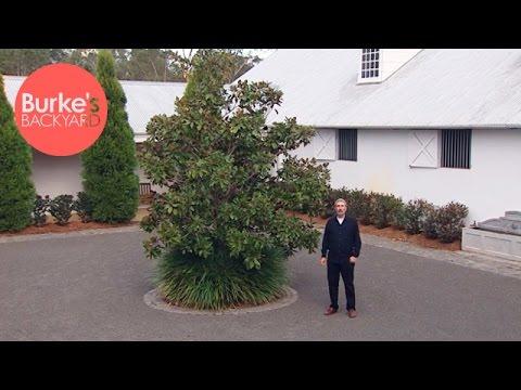 Burke's Backyard, Stylish Plants