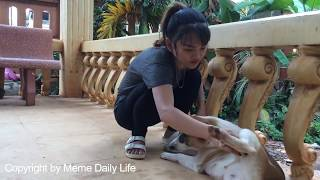 Smart Dog Playing With Cute Girl At Home - How to play with Smart dog (Part9)