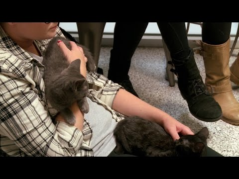 Jackson Galaxy's Sure These Two Kittens Will Be Adopted Soon | My Cat From Hell