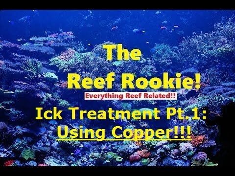 Ick Treatment Part 1: Copper Method
