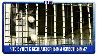 Что будет с безнадзорными животными?