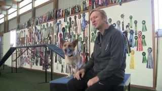Cisco The Agility Dog (& Humane Society Of Utah Alum)