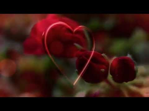 ♡ I Will Love You Still - SEAY (beautiful love song)