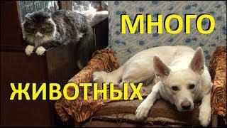 Выходной у животных (Птицы, кошки и собаки)