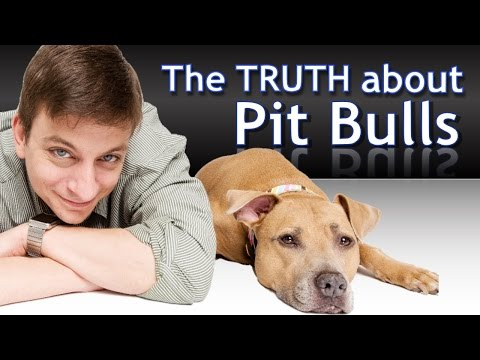 what-you-need-to-know-about-pit-bulls