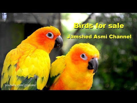 Sunday birds Market Karachi Birds for sale No # 3 in (Urdu/ Hindi)