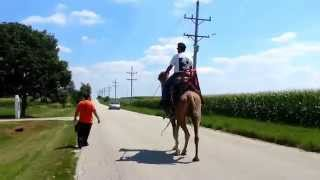 Call 815-600-6464-Animal Rental,Animal Rentals,Chicago Camel Guy 5,Camel Rental,Camel Rides,Chicago